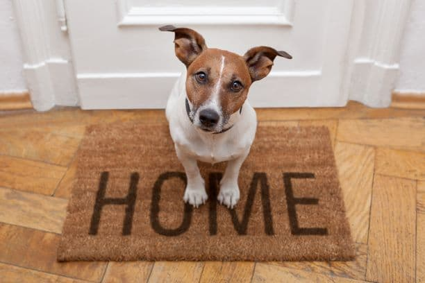 Relocating with Pets to a New Home _ Dog on a Home Welcome Mat